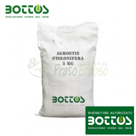 Bentgrass Stolonifera Alpha - Seeds for lawn-1 Kg