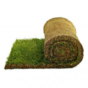 200 square meters of lawn that is ready in rolls + Mower